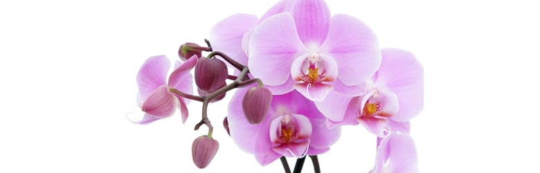 Orient Aroma